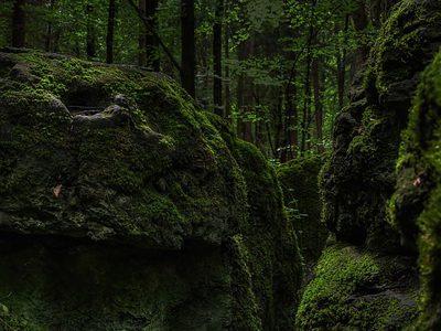 【BGM素材 神秘的な】森の聖域